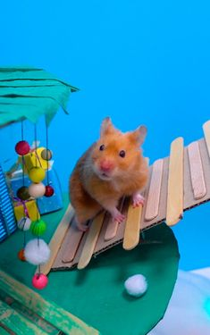 My cute hamster Pixie spends the winter holidays in amazing 5 cone maze in the form of Christmas tree. Hamster Life, Baby Hamster, Hamsters Video, Cute Hamsters, Baby Animals, Pixie, Labrador, Pets, People