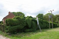 Man Spends Over 10 Years Transforming a Hedge into a Dragon