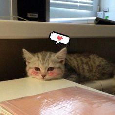 Котики | 《日本のアニメ》《Anime Love》 Amino