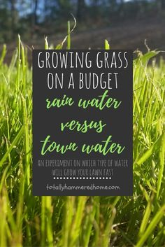 Growing Grass on a Budget Rain Water v Town Water Growing Grass, Lawn, Budgeting, Landscaping, Gardening, Good Things, Water, Gripe Water, Lawn And Garden