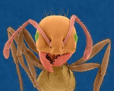 In pictures: Astonishing ants