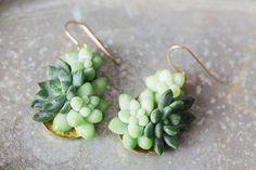 Jungle Plants Jewellry Collection – Fubiz Media