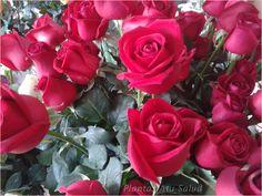 Rosas rojas para ti...
