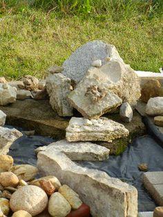 Grow a rock garden ...:-)