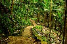 Puerto Rico - rainforest by Camera on autopilot, via Flickr