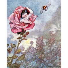 Flower Fairy Card Faerie Hides From Bee in Rose by KatyDidsCards © Charles Robinson