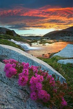 Summer flowers in the Eastern Sierras at sunrise, California, United States.