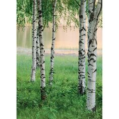 100 in. x 72 in. Nordic Forest Wall Mural, Multicolor