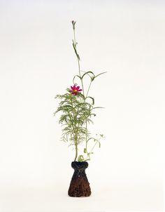 Plants without pots plant pot 6 bonus art photography