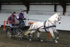 Indoor Carriage Driving Wix 16 Feb 2014 Mike Watts photo