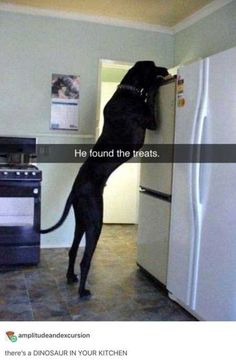 More funny animal pictures here. [optin-cat The post 38 Hilarious Animal Pictures appeared first on Gag Dad. Animal Jokes, Funny Animal Memes, Dog Memes, Cute Funny Animals, Funny Animal Pictures, Cute Baby Animals, Funny Cute, Dog Pictures, Funny Dogs