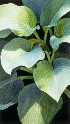 Rachel Colllins Rachel Collins considers herself a realistic painter of nature's abstract form. Although she grew up. Deco Floral, Arte Floral, Watercolor Leaves, Watercolor Paintings, Watercolors, Botanical Art, Botanical Illustration, Foliage Plants, Tropical Art