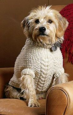 Vote for which sweater Kathleen should knit for her dog, Daisy I thinks she should knit all of them. Nothin' is too good for doggies! Crochet Dog Sweater, Crochet Pet, Pet Sweaters, Knitting Daily, Animal Sweater, Dog Jumpers, Dog Pattern, Dog Coats, Pet Clothes