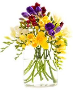 Photo about Freesia flowers bunch in a vase Isolated on white. Image of multi, bouquet, fragrant - 16700650 Very Beautiful Flowers, Beautiful Flowers Wallpapers, Amazing Flowers, Flower Images, Flower Pictures, Fresia Flower, Freesia Bouquet, Large Flower Arrangements, Deco Floral