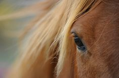 Love expressions of horses