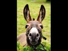 Donkey's Happy Birthday Song short and funny. not too baby-ish