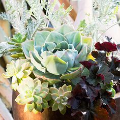 In the center of the container, a hybrid Echeveria sits like an unfolding lotus, but one with far more staying power than the fleeting flower.