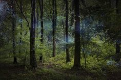 The dreamlike character of Davies' photos are powerfully compelling, bringing us to another dimension where forest entities are clearly visible #EllieDavies