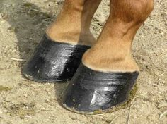 to care for your horse's hoovesLearn how to care for your horse's hooves How to Clean the Sheath of a Horse Disco Dancing Ankle Socks Embroidered Art Silk Asymmetric Sherwani in Navy Blue Chloe Shoes Horse Training Tips, Horse Tips, Horse Stalls, Horse Barns, Western Horse Tack, Western Saddles, Natural Horsemanship, Horse Grooming, Show Horses