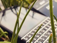 "#inst10 #ReGram @phoneing: 朦朦胧胧的#黑莓手机  #blackberry  #q10  #9900 . . . . . . (B) BlackBerry KEYᴼᴺᴱ Unlocked Phone ""http://amzn.to/2qEZUzV""(B) (y) 70% Off More BlackBerry: ""http://BlackBerryClubs.com/p/""(y) ...... #BlackBerryClubs #BlackBerryPhotos #BBer ....... #OldBlackBerry #NewBlackBerry ....... #BlackBerryMobile #BBMobile #BBMobileUS #BBMobileCA ....... #RIM #QWERTY #Keyboard .......  70% Off More BlackBerry: "" https://ift.tt/2otBzeO ""  .......  #Hashtag "" #BlackBerryClubs "" ......."