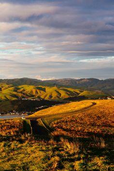 The Golden Glow Wellington New Zealand Wellington New Zealand, Daily Photo, Glow, Mountains, Travel, Outdoor, Outdoors, Viajes, Trips