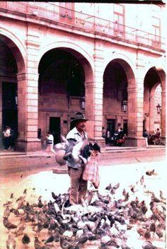 Señor de las palomas
