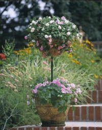 Hanging Basket Topiary