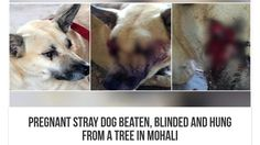 Please sign this Petition · Honourable Prime Minister of India Shri Narendra Modi: Reinforce the Animal Law in India & Punish these 3 people for brutal killing of dog · Change.org