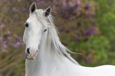 What a beautiful White Horse with such a kind eye!