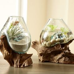 Naturally sculptural reclaimed teak roots become the base for this artful planter. The blown glass vessel seems to pour over the roots and sit beautifully, frozen in time, catching eyes in your home. See It Here >> http://jdtc.us/1R2MbL7