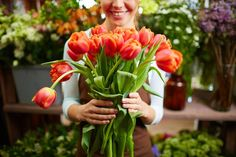Fresh Tulips Bouquet cut by garden cleapers available at Till Harvest, your professional quality pruner, offers their very own Gentle Giant Auto-Revolving Bypass Pruner that will help you flourish nature as you use this gardening tool.  Located at 5021 Verdugo Way Suite 105-172 Camarillo CA 93012 USA. Visit http://www.ukcrew4u.com/tillharvest