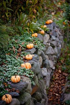 Love pumpkins.... love stone walls!