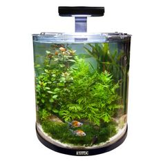 Compost vid os and planters on pinterest for Aquarium jardiland