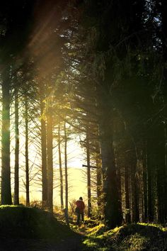 Enniskerry Woods, #Wicklow, Ireland