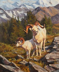 Chad Poppleton (1976– 1976), Dall Sheep Low on the Mountain, oil on canvas, 24 x 20 in, JHAA 2011 Sold: $2,875