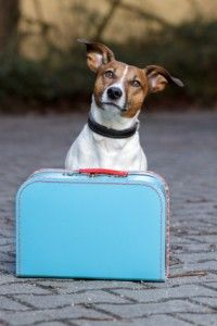 Learn how to choose the best doggy daycare