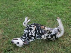 I just love to roll in the grass!!!