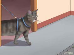 Leash Train a Cat Step 7 Version 3.jpg