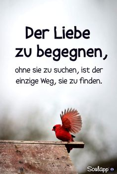 So wie wir, Schatz Daizo💗👫🍀 – Best Quotes images in 2019 Osho, German Quotes, Word Pictures, Some Quotes, True Words, How To Memorize Things, Self, Love You, Wisdom