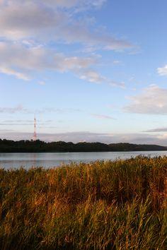 Lake Sanaru, Hamamatsu-city,  佐鳴湖の葦 Reed of madder