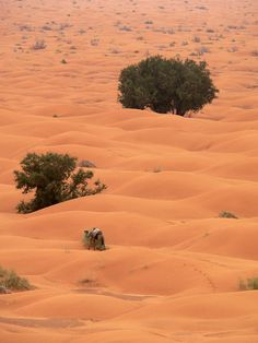 Ksar Ghilane, Tunisia   - Explore the World with Travel Nerd Nici, one Country at a Time. http://TravelNerdNici.com