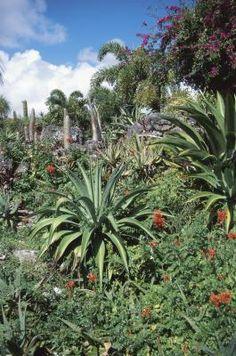 Cuidado de la palma de Madagascar