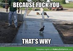Duck doesn't care