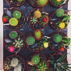 Cacti | Justina Blakeney on Facebook