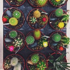 Cacti | Justina Blakeney on Facebook