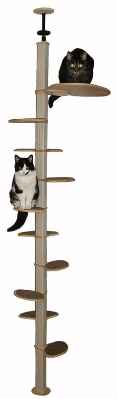 Want this for my cats / Catvantage / www.catvantage.net - $216 includes 6 small stairs, 3 large stairs and 1 loft (I think)