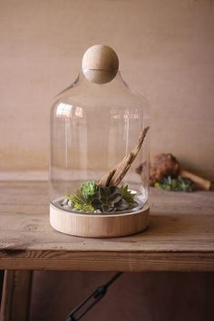 Glass Terrarium with Wood Top- Large