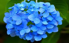beautiful flowers - חיפוש ב-Google