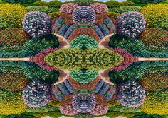 Karl Maughan's hyper real paintings turned prints for Stolen Girlfriends Club Patterns In Nature, Textures Patterns, Print Patterns, Amazing Maze, Psychedelic Art, Mandala Art, Contemporary Artists, Flower Power, Printing On Fabric