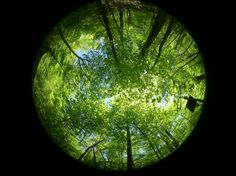 Look Up! Pin It Credit: Cynthia L. Cunningham, U.S. Geological Survey-Normally, photographing nature shouldn't require any special effects, but this dramatic scene, shot using a fish-eye lens, captures the incredible beauty of tree canopies in Virginia's Shenandoah National Park.